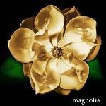Magnolia14's avatar